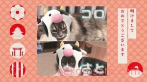 【一人暮らしで猫2匹】猫と1年暮らして想像の暮らしと違ったこと