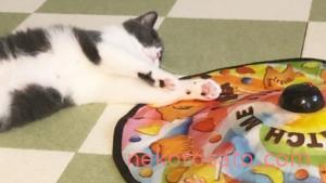 猫と遊べないときの強い味方! キャッチミーイフユーキャン 2【レビュー】