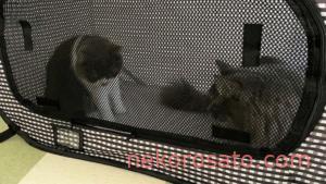 【猫の防災準備】猫壱 ポータブルケージ・トイレを使ってみました