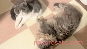 猫の日って何月何日? 2月17日は「World Cat Day」