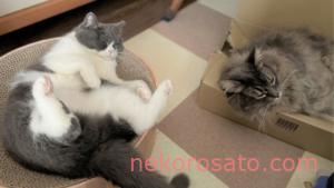 【猫2匹と一人暮らし】たくさんの幸せとよかったこと、少しの困ったこと