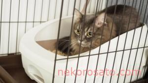 猫の健康診断で尿にストルバイトが・・・! 療法食に切り替え中です