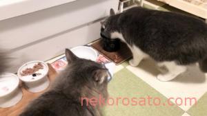 【ニュートロ デイリーディッシュ】うちの猫の味評価ランキング