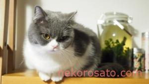 【うちの猫】猫の表情がコロコロ変わってかわいすぎるのです