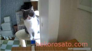 ペットカメラに映る猫がかわいすぎ! おすすめカメラにどう映るか紹介