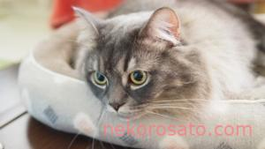 猫の冬の快適室温は?留守番中に暖房は必要?寒さ対策を紹介