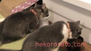 【子猫用】うちのコも大好き!おすすめキャットフードBEST4