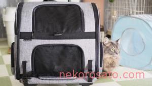【猫2匹飼い】キャリーバッグはカート式がおすすめ! AirBuggy for Pet Fitt レビュー