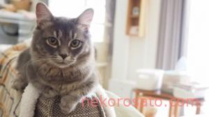 【猫2匹飼いでの去勢手術】どんな手術?変化は?費用は?うちのコ体験談