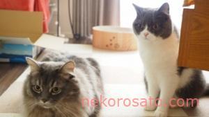 【うちの猫】2021年お正月のコロ&さと写真集