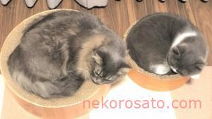 【猫2匹暮らし】最初の1年でかかった費用はどれくらい?