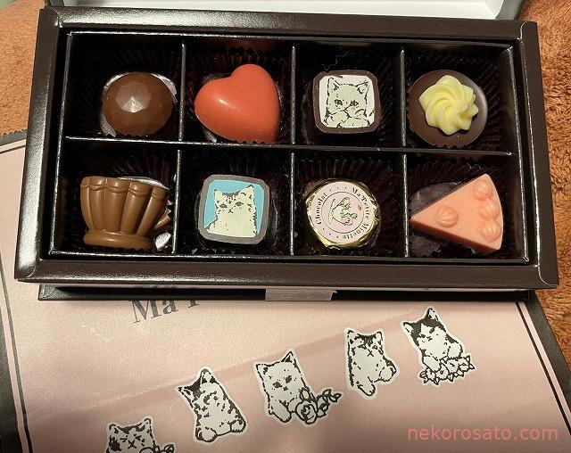メリーの猫チョコ