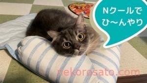Nクールのペットベッドで猫もひんやり快適睡眠zzz