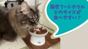 猫壱のフードボウル 食べやすいサイズはどれ?