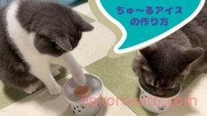 夏におすすめ猫おやつ「ちゅーるアイス」の簡単作り方