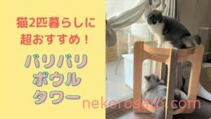 バリバリボウルタワーで猫2匹も飼い主も幸せUP!|猫壱の爪とぎベッド