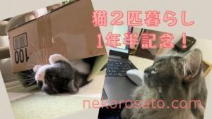 猫2匹飼いも1年半! コロ・さとも日々進化&性格変化中です