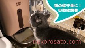 一人暮らしの猫飼いには自動給餌器がおすすめ!留守でもスマホでフードが出せる|口コミレビュー