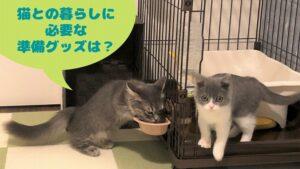 【はじめて猫を迎える前に】必須準備グッズ6+あるといい6を紹介(経験談)